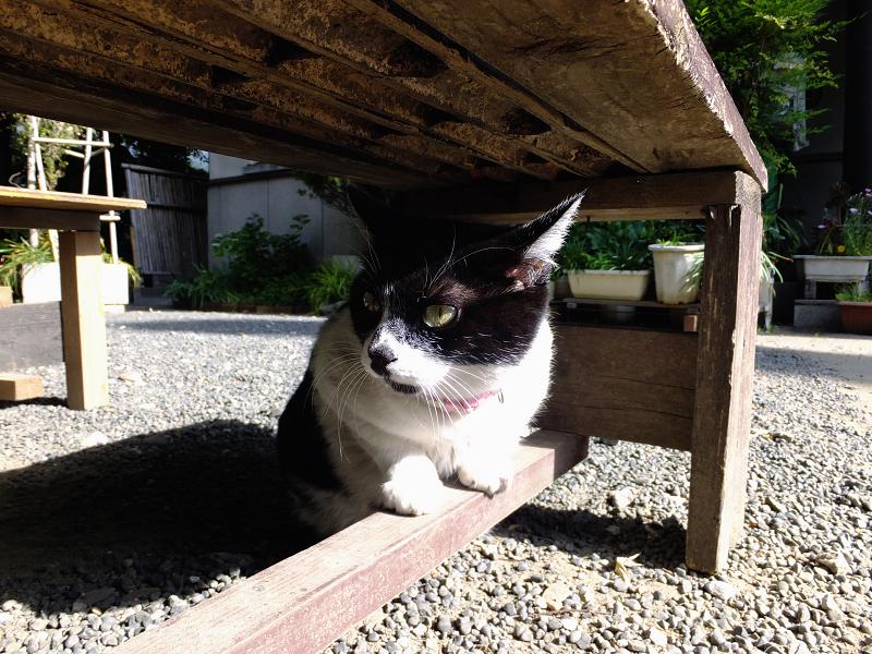 ベンチの下で睨んでるネコ