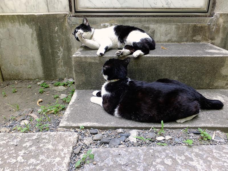 階段に上下に並んで座ってるネコ