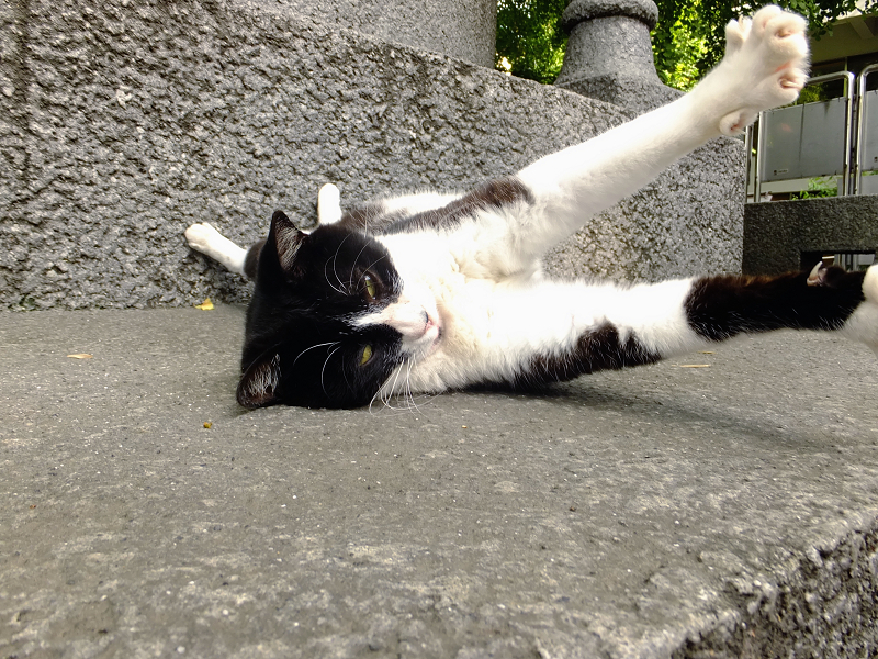 寝ながら手足を伸ばすネコ