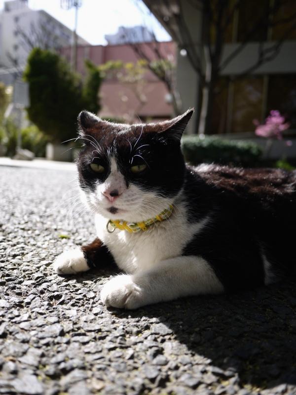 初夏の光で輝いてるネコ
