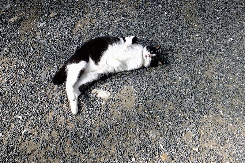 仰向け視線のネコ