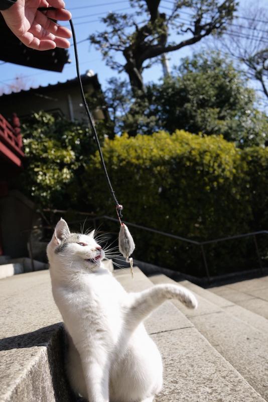 階段でねずみで遊ぶネコ