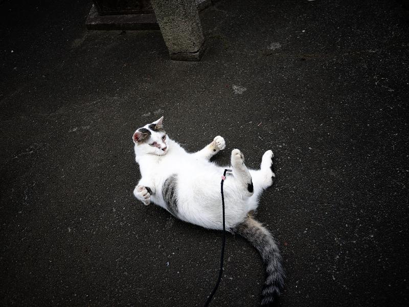 転がりながらネズミで遊ぶネコ