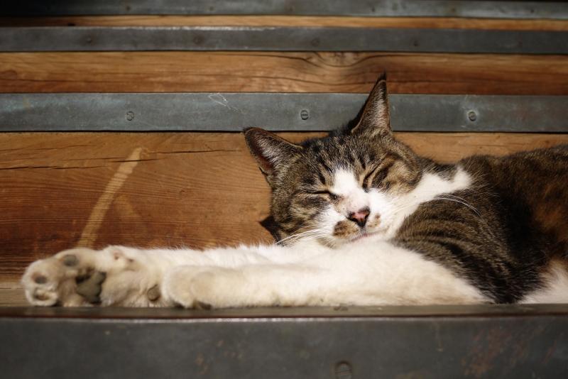 お堂の階段で腕を伸ばして寝てるネコ