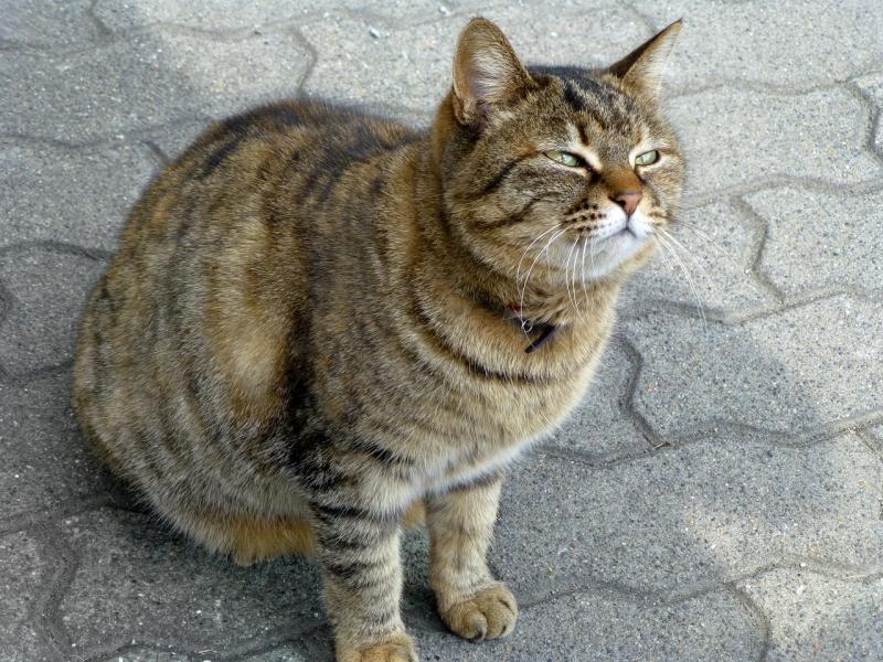 ふくれっ面のネコ
