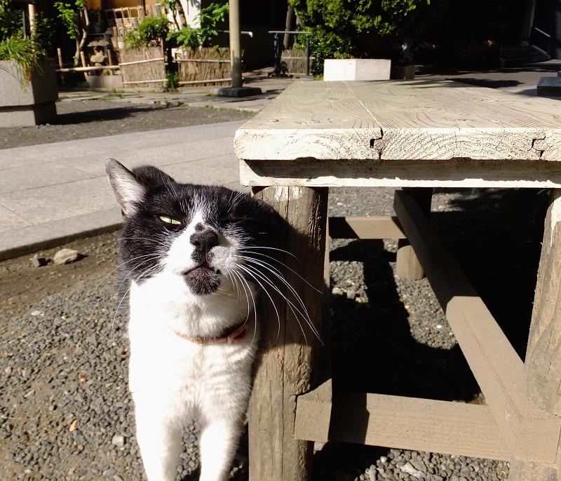 ベンチの足に顔を擦りつけるネコ