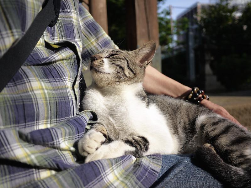 膝の上でマッタリ中のネコ