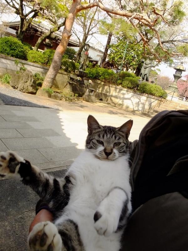 赤ちゃん抱っこされるネコ