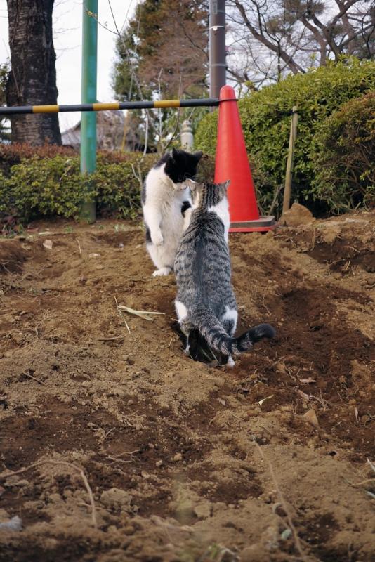 工事現場のネコ