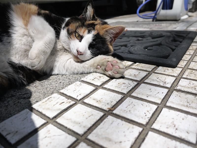 タイルの上で肉球を見せる猫