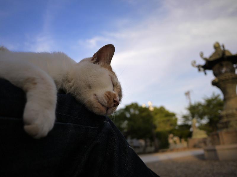 膝に乗って寝てしまったネコ