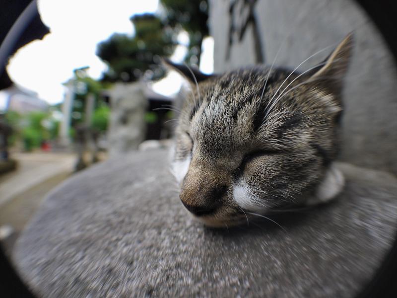 寝てるネコを魚眼で