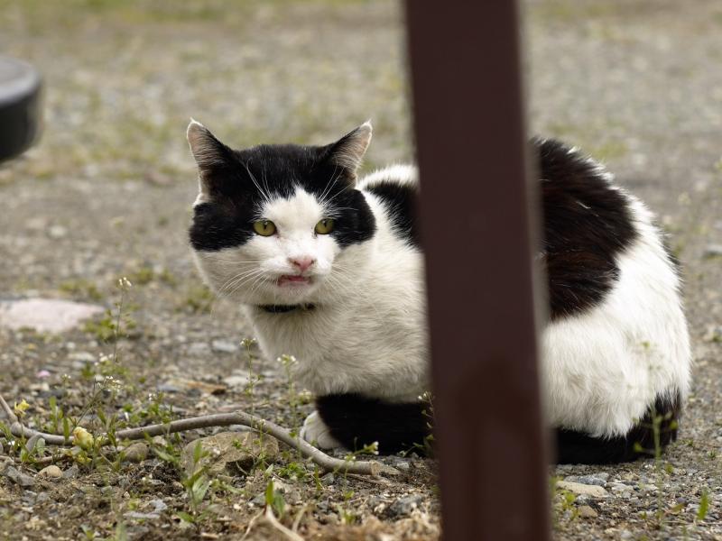 鋭い表情のネコ