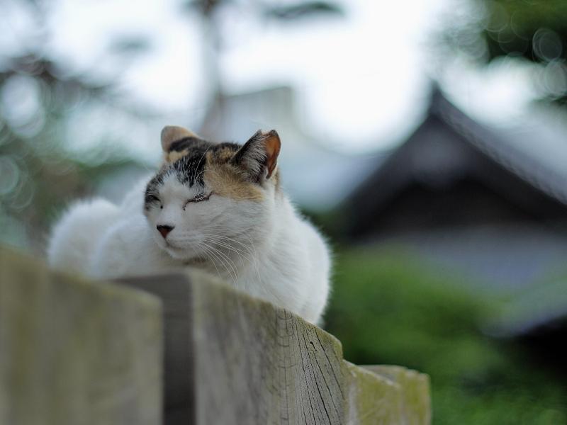 玉暈け満載のネコ
