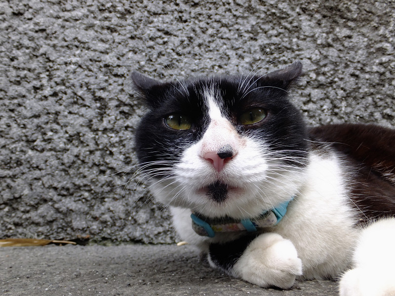 石壁の前のネコ