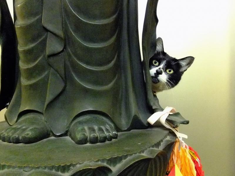 仏像の後ろから顔を出すネコ