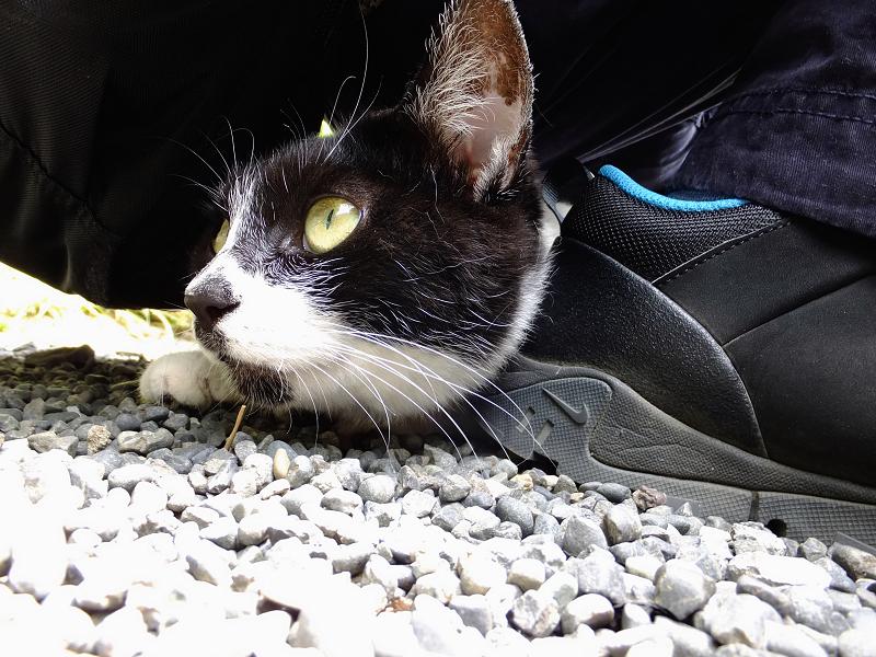 お尻の下に潜り込んでるネコ