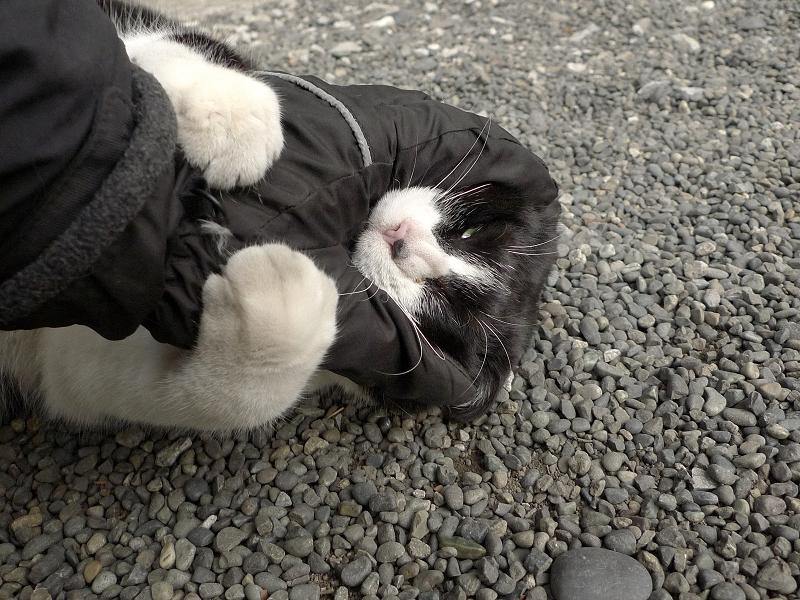 顔を掴まれてるネコ