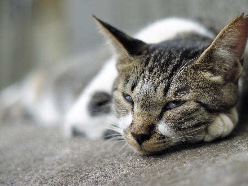 寝てるネコを開放で