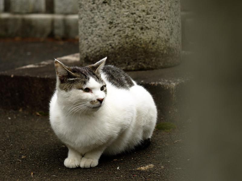 玉垣の間から写したネコ
