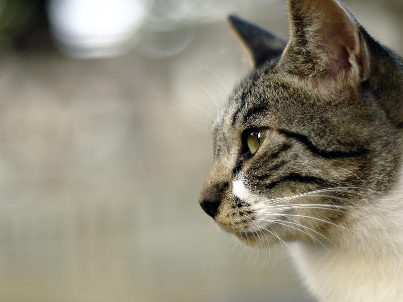 ジーッと遠くを見てるネコ