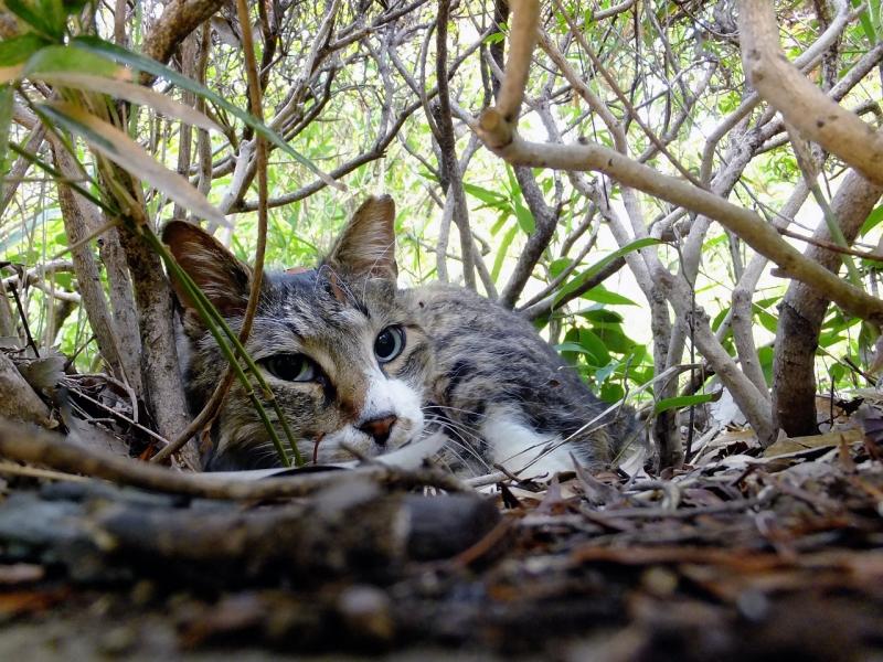 茂みの中の寝起きネコ