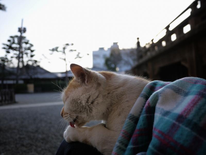 フリースを背中に掛けて毛繕いするネコ