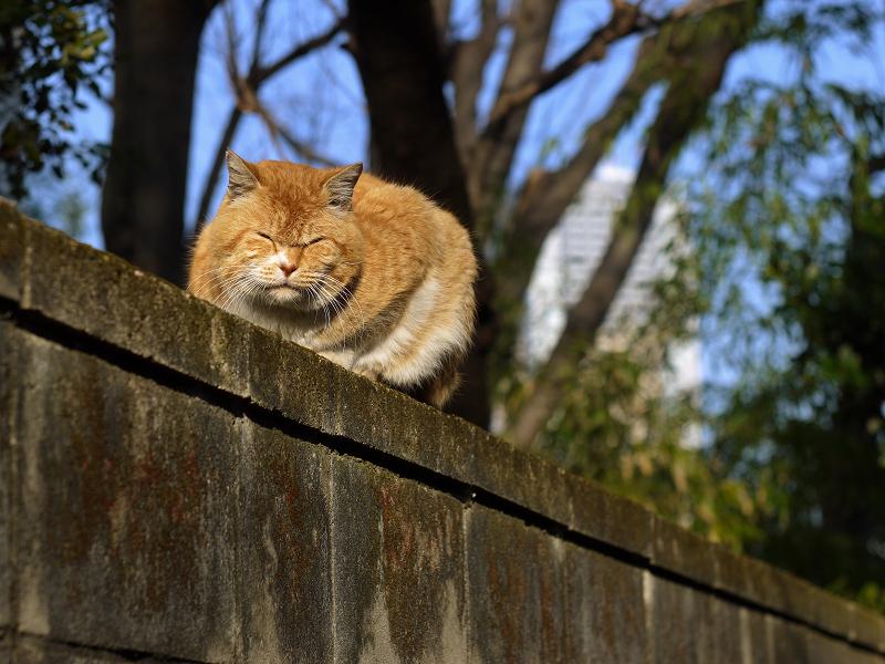 塀の上で光を受けてるネコ