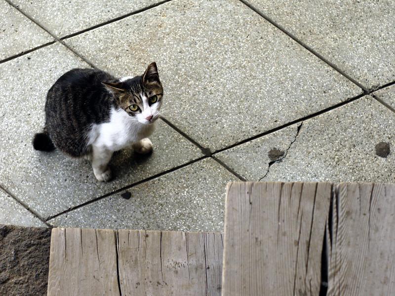 階段の端で見つめ合うネコ