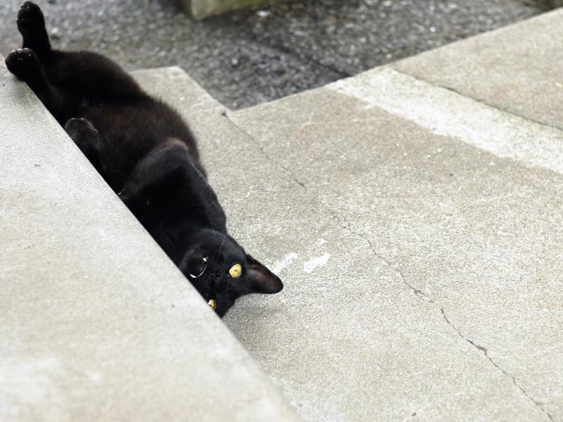 階段で仰向けになってるネコ