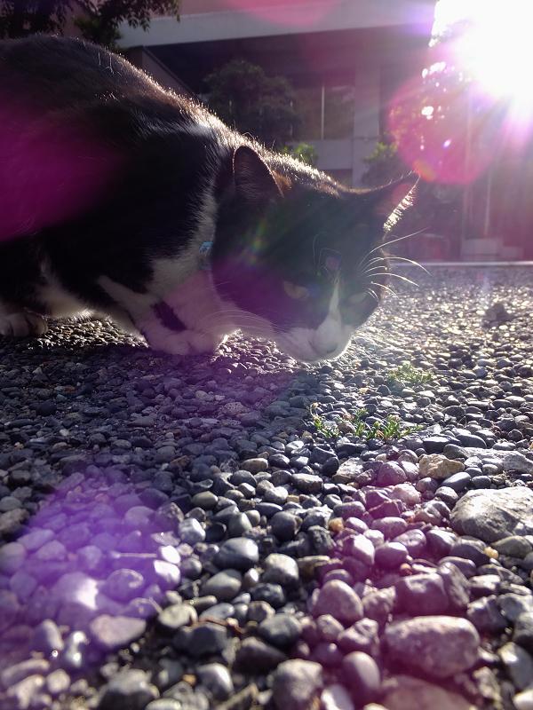 紫の光に包まれてるネコ