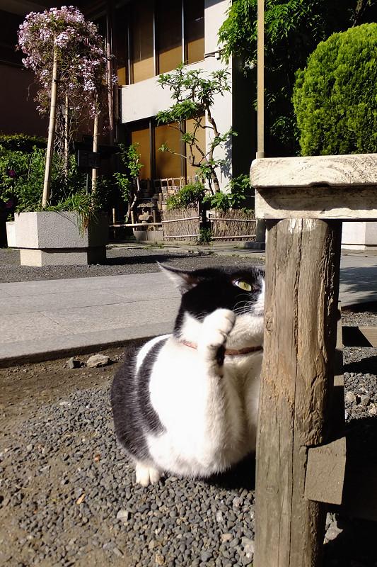ベンチの脚で爪を研ぐネコ