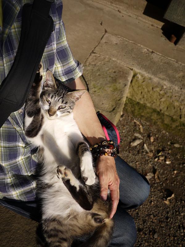 バッグの肩紐に爪がひっかかってるネコ