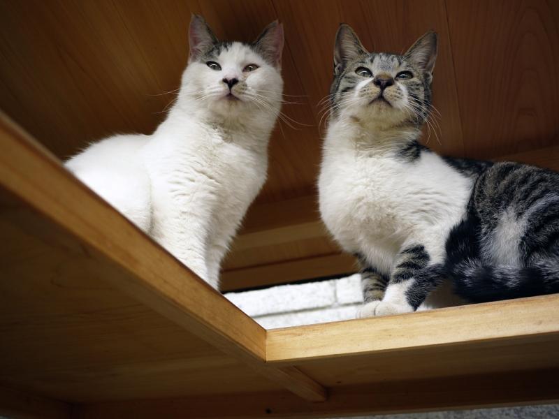 小屋のような物の中にいるネコ
