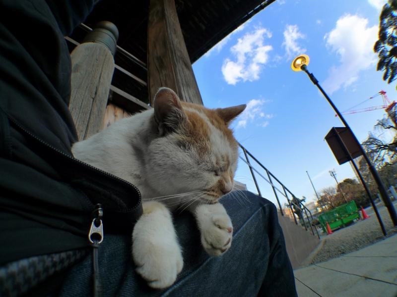 膝の上でだらけてるネコ