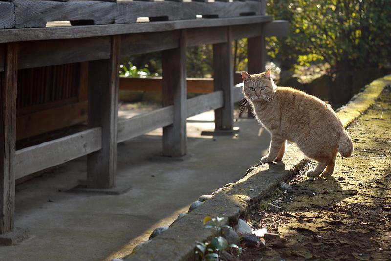 お堂の横の逆光ネコ