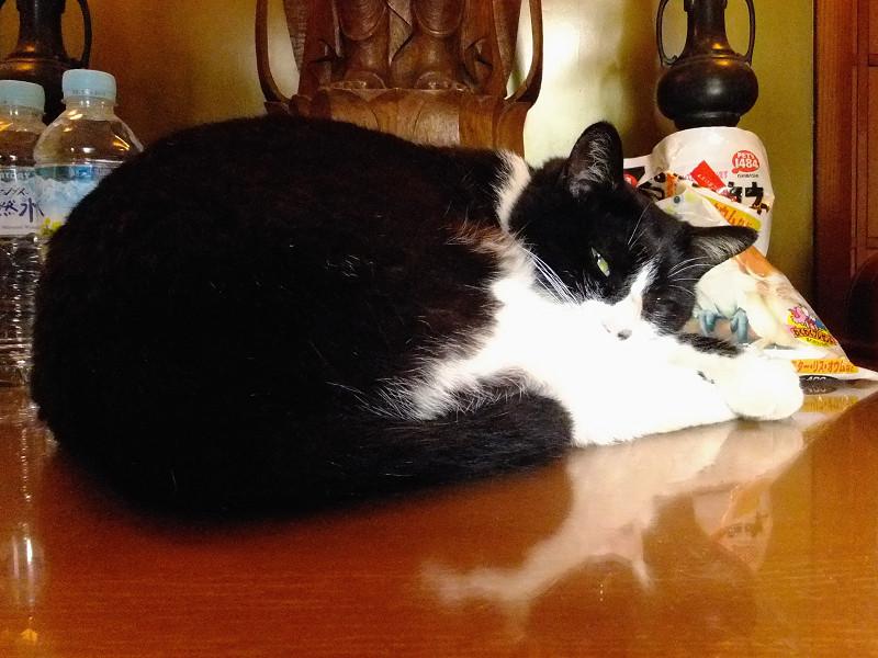 阿弥陀様の足下で休憩中のネコ