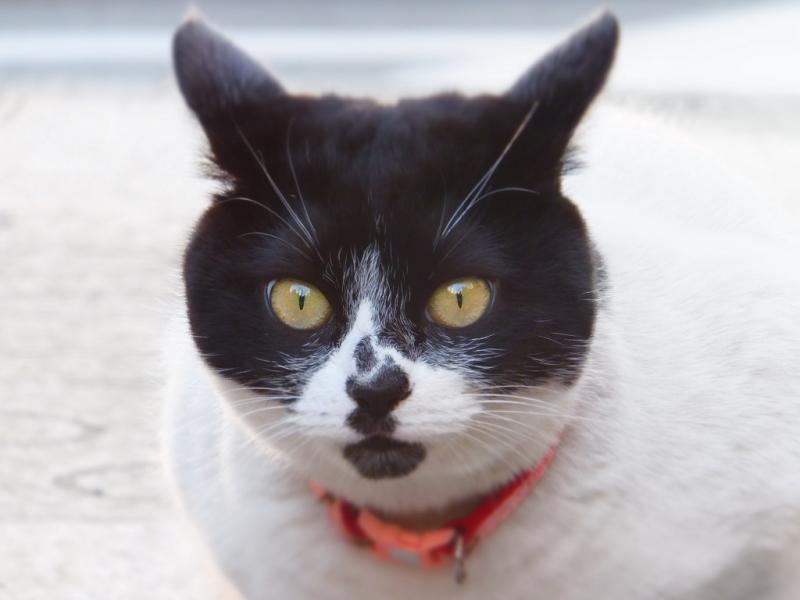 丸い顔に丸い目のネコ
