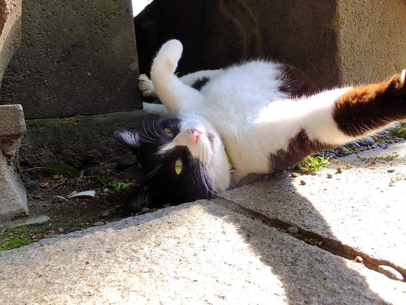 石柱の隙間で仰向けになってるネコ