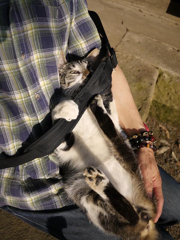 肩紐と胸の間に潜り込むネコ