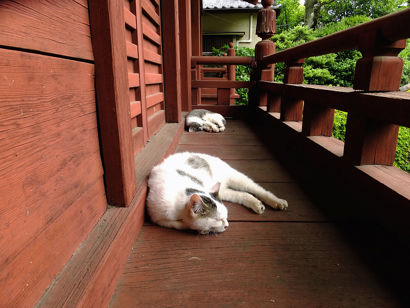 朱色の濡れ縁で見ている猫たち