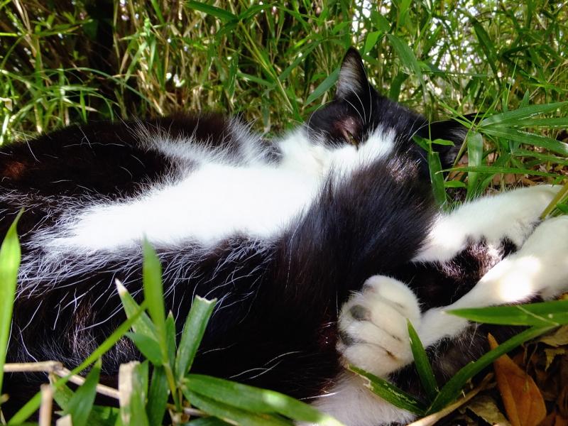 茂みでクルンとなってうネコ