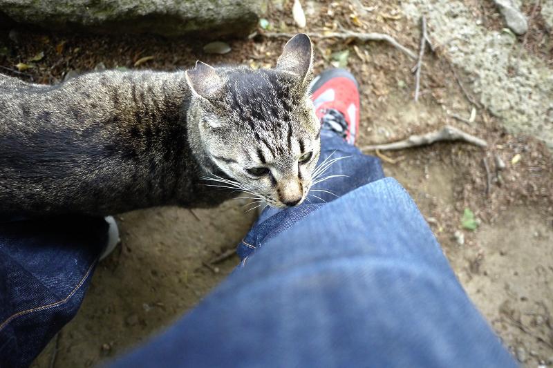 ジーンズのニオイが気になってるネコ