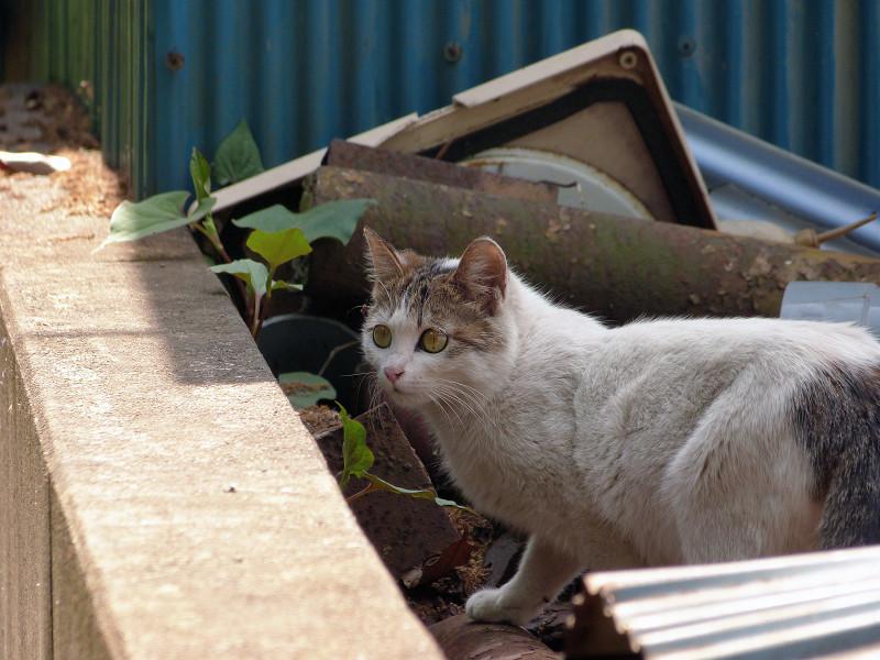 まん丸な目のネコ