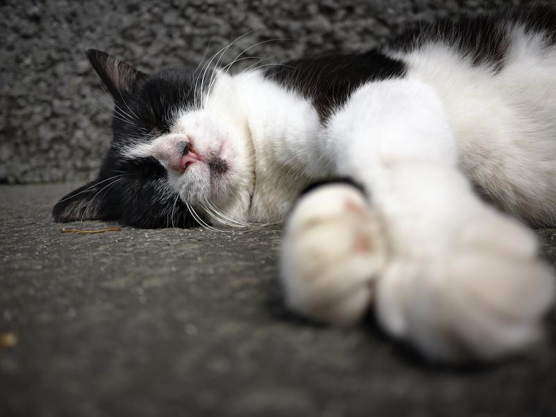 思いっきり寝てるネコ