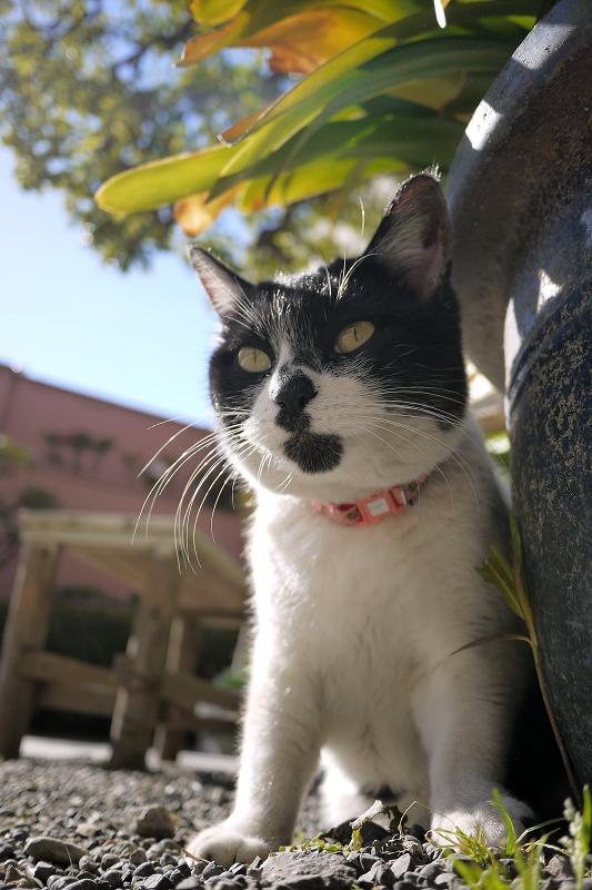玉砂利のネコをローアングルで