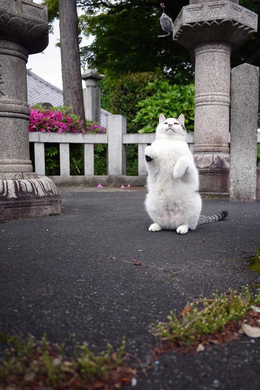 石道路の間でネズミを見上げてるネコ