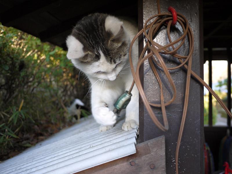 電気コードで遊ぶネコ