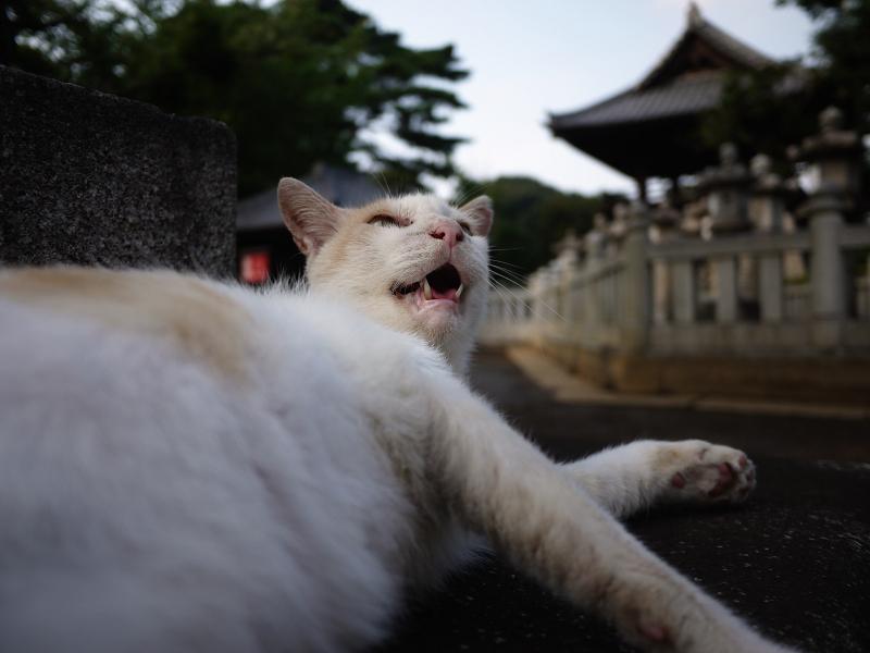 腰をトントンされるネコ