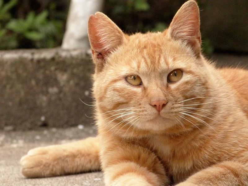 視線を逸らしてるネコ
